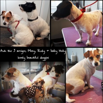 baby Holly,Missy+Rudy_22Feb16