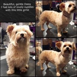 Daisy_4Jan16