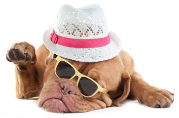dog grooming, dog grooming bury, dog grooming bolton, dogs, grooming,