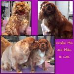 Milo+Millie_29Jan16