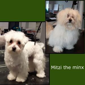 Mitzi_2Nov15