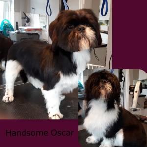 Oscar 2015-10-18-20-17-57