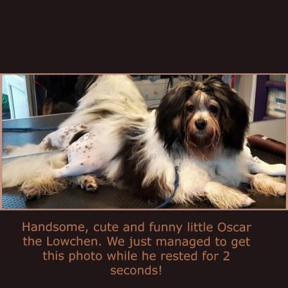 Oscar_23Jan16