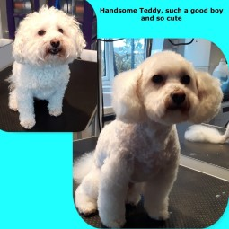 Teddy_4Jan16