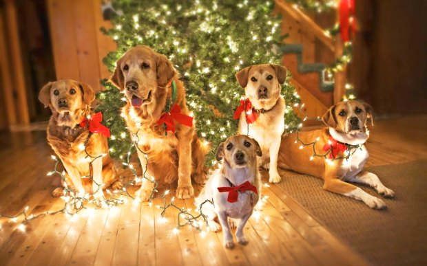 free-happy-cute-dogs-christmas-eve-computer-desktop-wallpapers