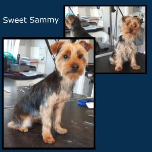 Sammy_2Nov15