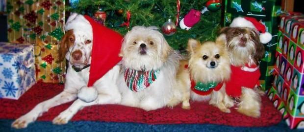 Christmas-Dogs-christmas-13861190-1024-830