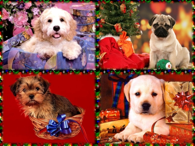dogs-christmas-gift-dog-lovers-puppy-holiday-wallpaper-background-free