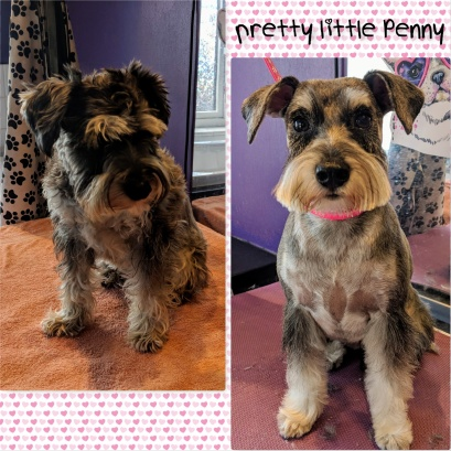 Dog Grooming Whitefield Pawbliss Dog Grooming Ainsworth