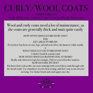 curly wooly coat