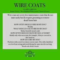 wire hair coat