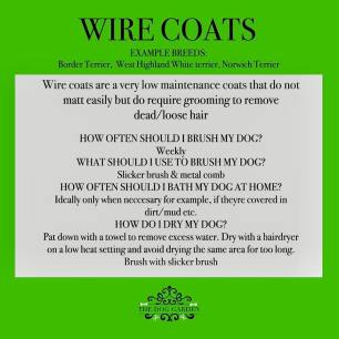wire hair coat